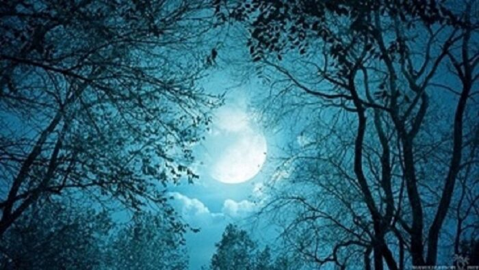 когда сажать редис и репу по Лунному календарю фото