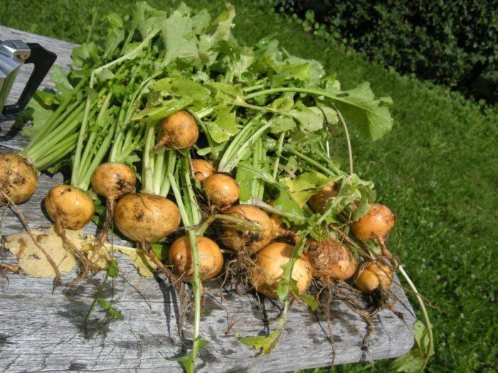 фото урожая 3