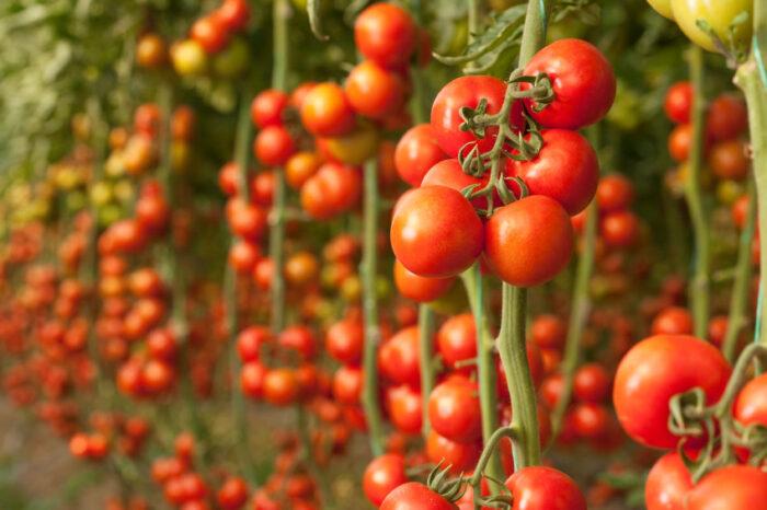 фото урожая прошлого года 5