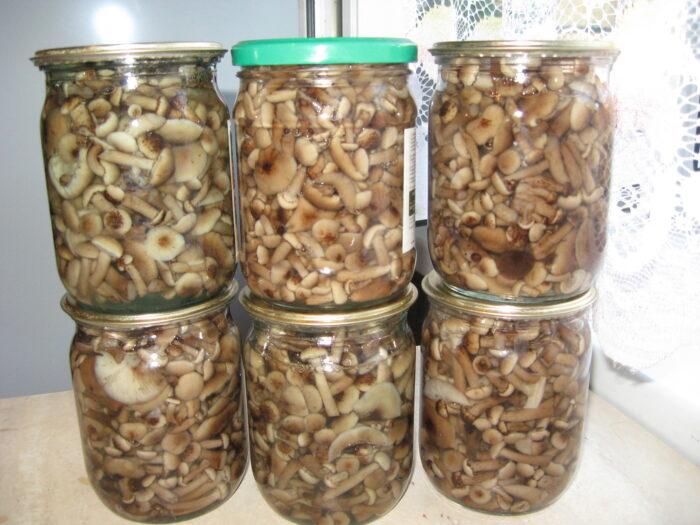 маринование луговых опят, классический рецепт фото