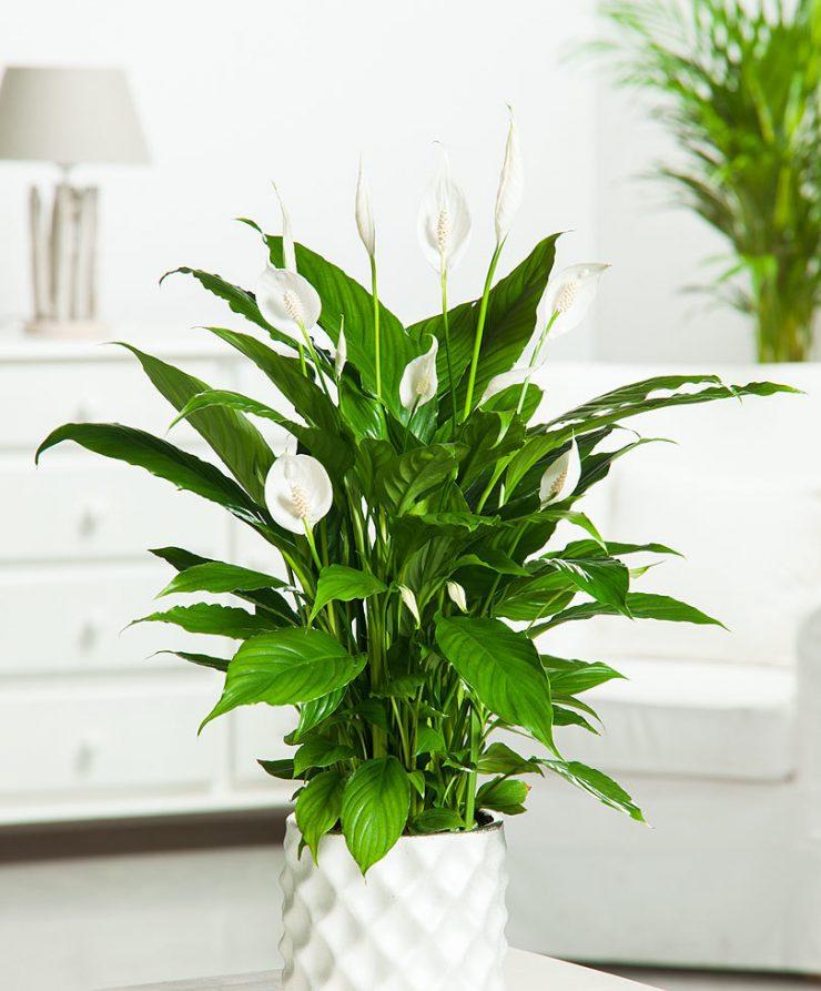 комнатные растения в июне 2020 года по Лунному календарю: посадка, полноценный полив, подкормка и пересадка фото 2