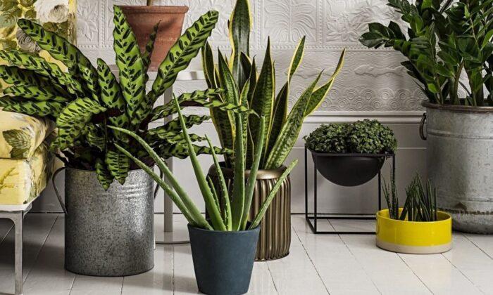 комнатные растения в июне 2020 года по Лунному календарю: посадка, полноценный полив, подкормка и пересадка фото 3
