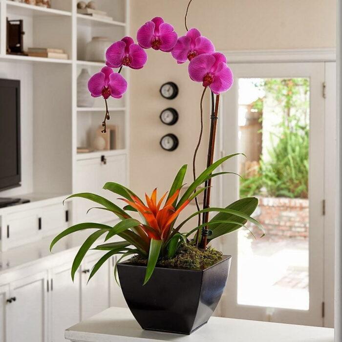 регулярность поливов комнатных растений в июне 2020 года фото