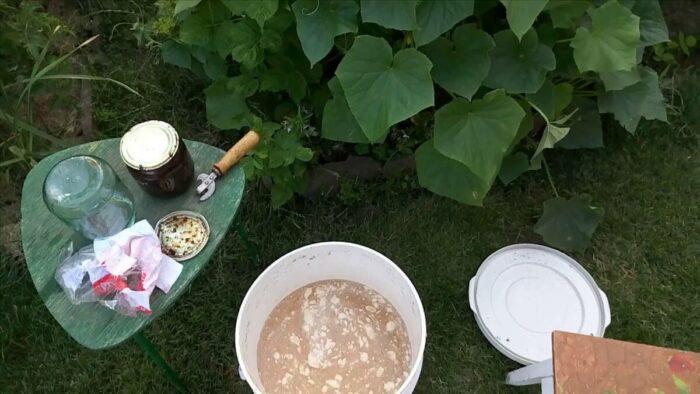 подкормка дрожжами помидоров и огурцов в открытом грунте, теплице и парнике - лучшие рецепты фото