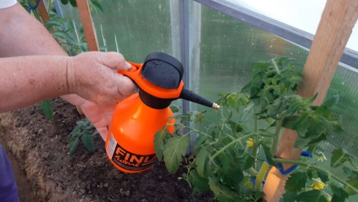 чем удобрять помидоры в период цветения фото