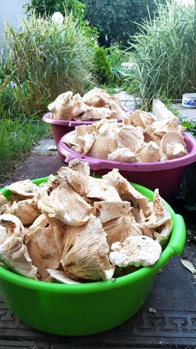 Маринованные лисички на зиму рецепты приготовления