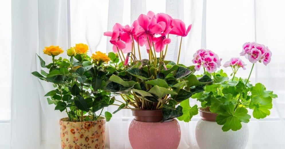 Лунный календарь для комнатных растений на октябрь 2020