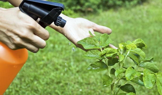 Как бороться с вредителями и болезнями растений