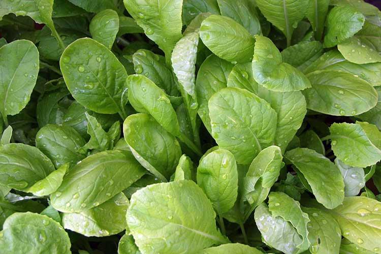 Как вырастить овощи и зелень осенью?
