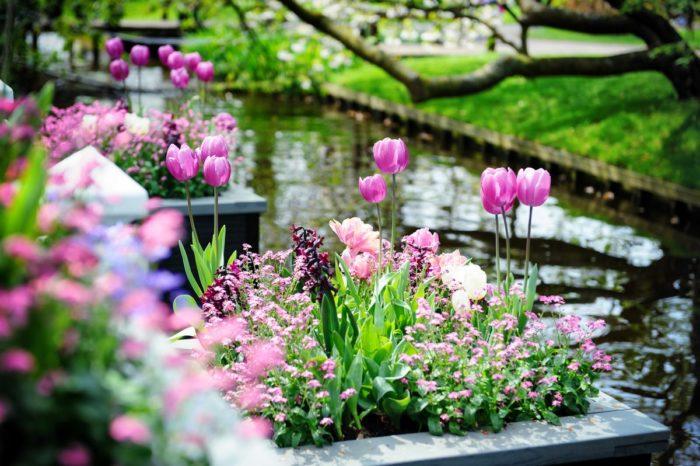 Уход за растениями в весенне-летний период