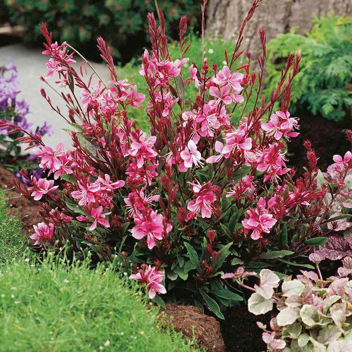 Розовые украшения для сада