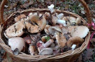 Съедобные грибы в Крыму - фото с названиями, где можно собрать