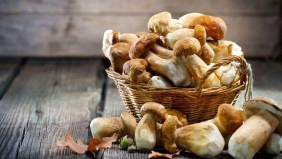 белый гриб фото и описание