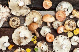 Как узнать съедобный гриб или нет
