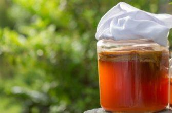 Чайный гриб - уход и использование