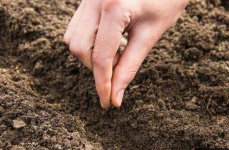 Когда сажать редиску весной в открытый грунт в 2021 году