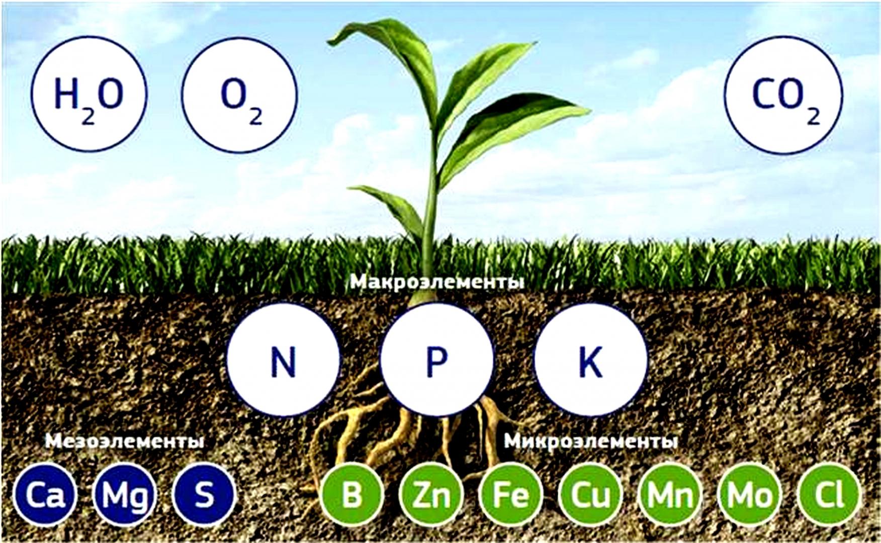 Микроэлементы для растений: что добавить в почву?