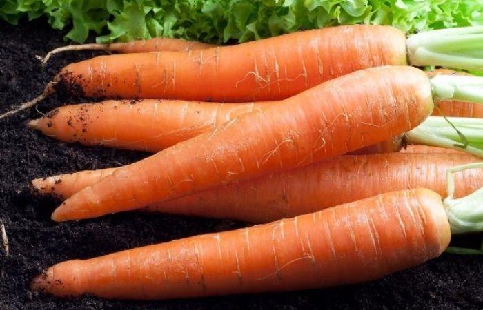какой сорт моркови самый сладкий сильно сладкий