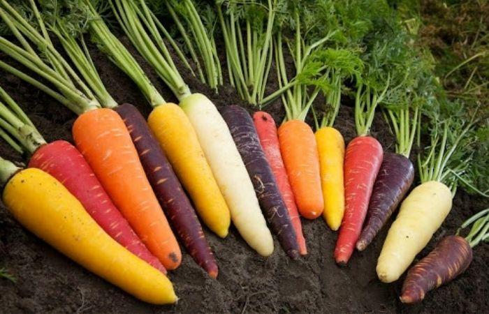 какой сорт моркови самый сладкий