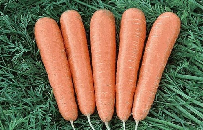 какой сорт моркови самый сладкий и сочный