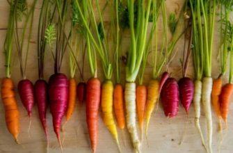 сладкая морковь сорта