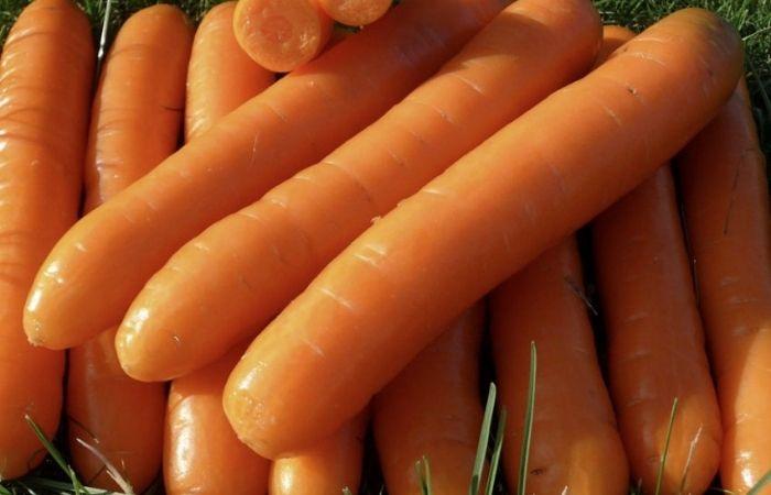 морковь зимняя сладкая описание сорта