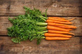 морковь семена лучшие сорта для открытого грунта