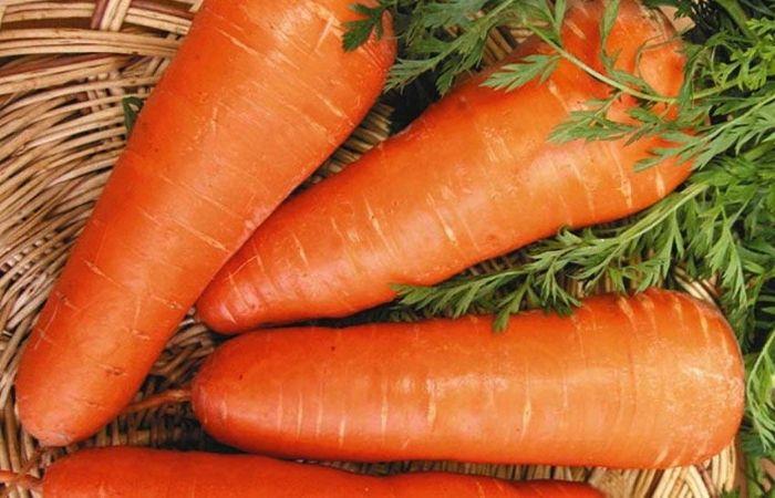 морковь сладкая сорта для подмосковья