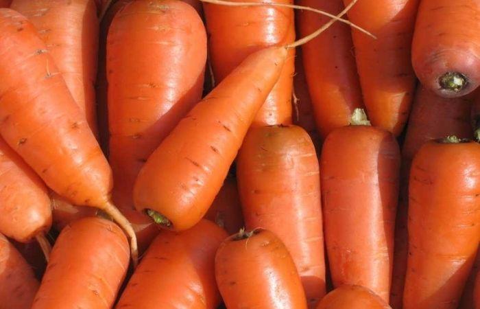 морковь сорта лучшие сладкие