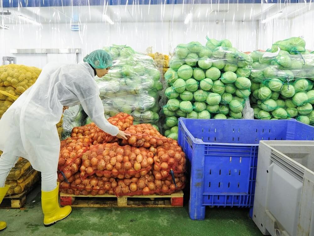 Особенности регулирования температуры на овощехранилище