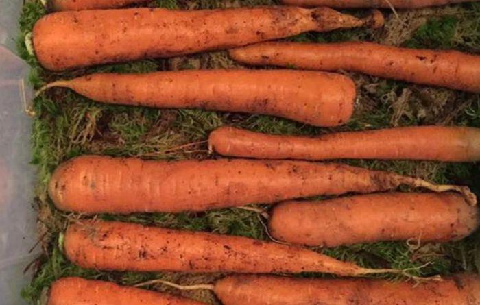 как хранить морковку