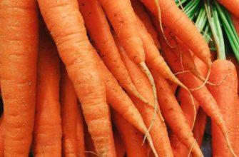 как посеять морковь чтобы быстро взошла