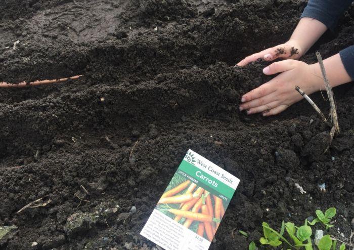 полив моркови после посадки