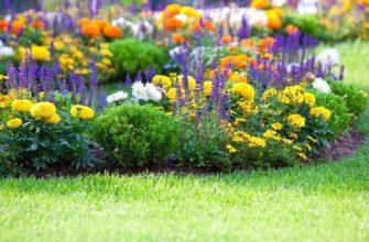 Уличные цветы многолетники: фото с названиями