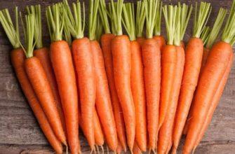 морковь под зиму сорта и когда сажать