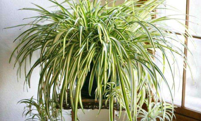 Основные принципы ухода за комнатными растениями