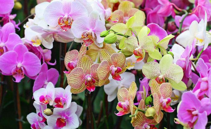 Орхидеи: стильные растения из тропических лесов