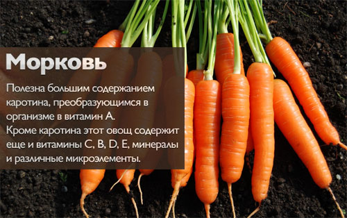 Характеристика и описание сорта моркови «Император»