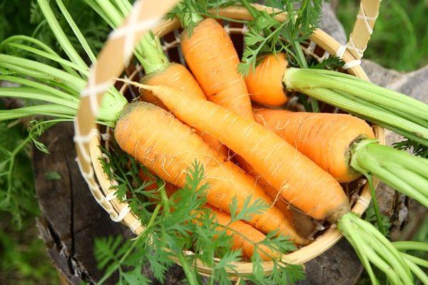 Морковь Карамелька: описание сорта