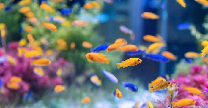 Способы установки аквариума в квартире: популярные варианты